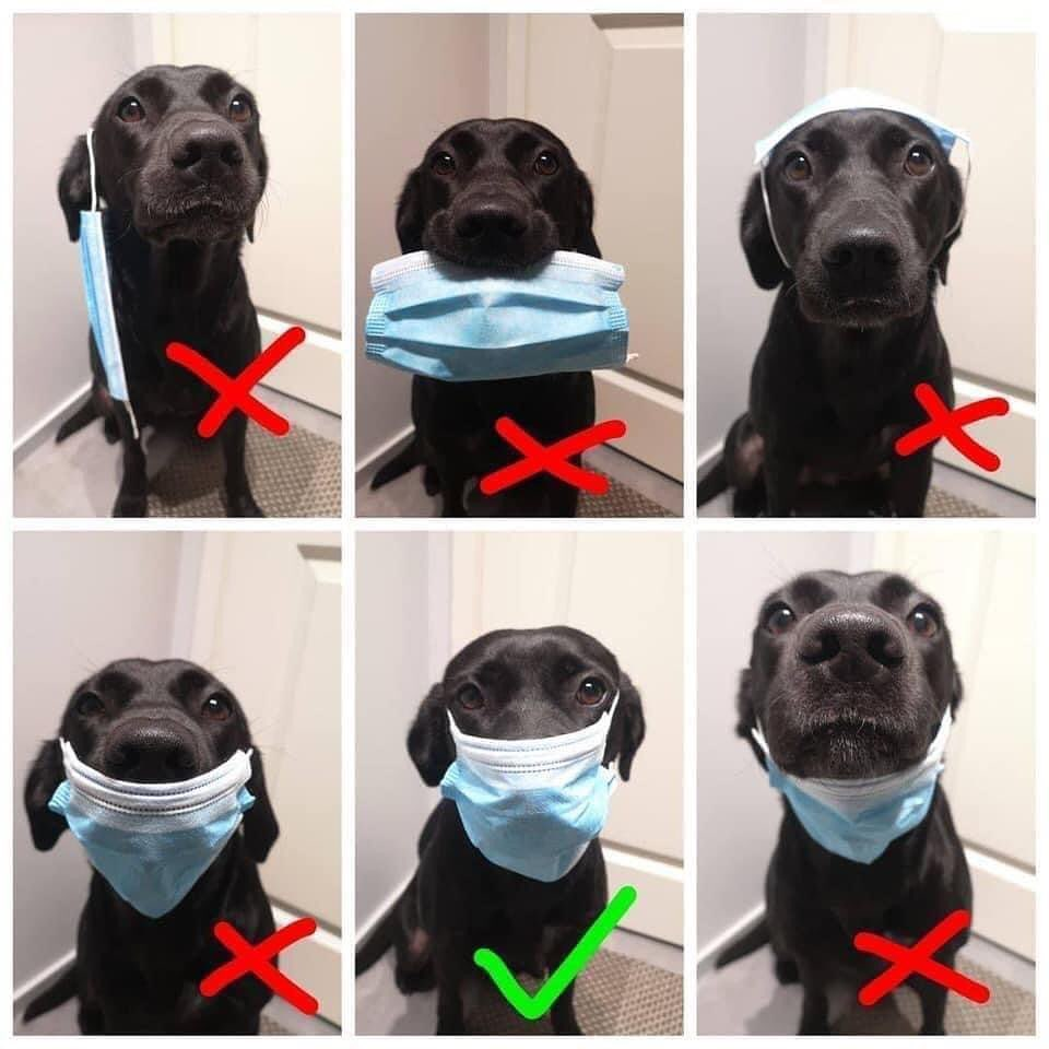 Wearing a mask is mandatory at all times while in our office. Please use this ha…